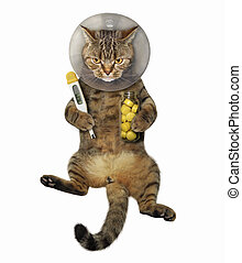 Cat with e-collar and jar of pills