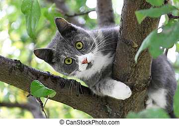 Cat with green eyes sitting on a tree trunk