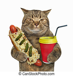 Cat with hotdog and latte