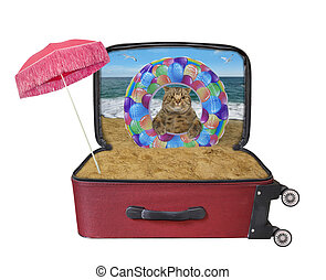 Cat with inflatable ring in suitcase