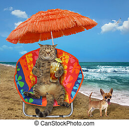Cat with juice in a sun lounger