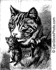 Cat with kitten, vintage engraving.