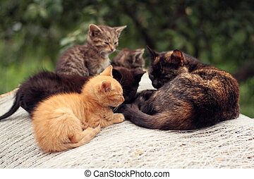 Cat with kittens - group of kittens and their mother lying and resting together in a group on a bale of straw
