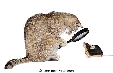 Cat with myopia - Humorous conceptual image of a nearsighted...