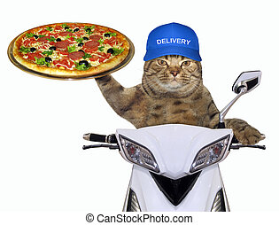 Cat with pizza on the scooter 2
