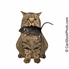 Cat with rat in its mouth