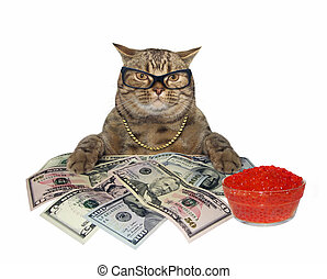 Cat with red caviar and money