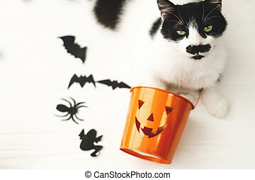 Cat with serious emotion relaxing at Jack o lantern candy pail on white background with bats and spider decorations, celebrating halloween at home. Trick or treat!