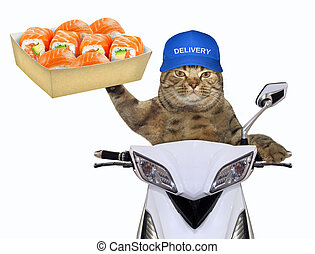 Cat with sushi on the scooter 2