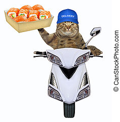 Cat with sushi on the scooter