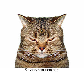Cat with third eye 2