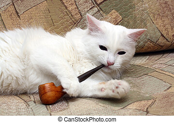 cat with tobacco-pipe
