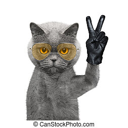 Cat with victory fingers. Isolated on white