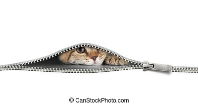 cat with zipper hole isolated on white