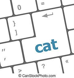 cat word on computer pc keyboard key