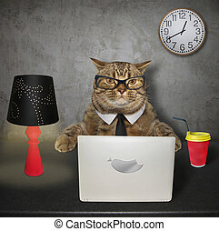 Cat works on the computer 2