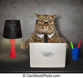 Cat works on the computer