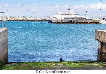 Catamaran docked at harbour on Robben Island with cormorants...