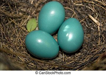 three catbird eggs nestled in a nest