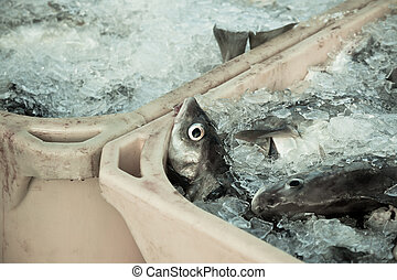 Catch of the day - Fresh Fish in Shipping Containers - Catch...