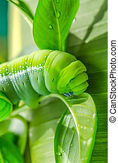 Caterpillar eating leaves of a tree