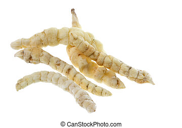 Caterpillar Fungus Isolated - Caterpillar fungus, Vegetable...