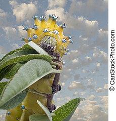 Caterpillar of Giant Peacock Moth