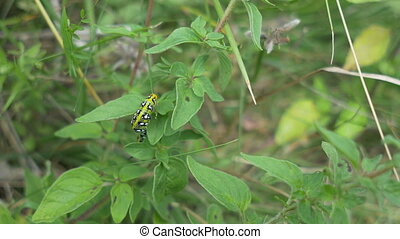 Caterpillar on Plant