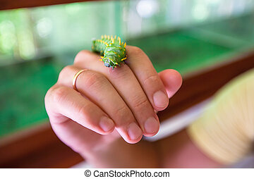 Caterpillar on the hand of a man