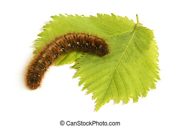 Caterpillar with green leaf