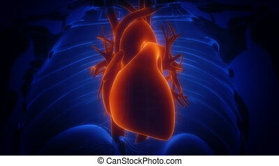 cation, coeur, rayon x, loopable