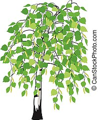 catkins, árvore, vidoeiro