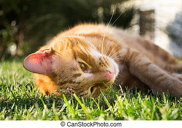 Catnip, gato