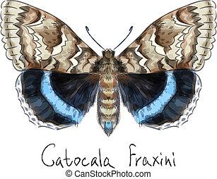 catocala, fraxini., mariposa, acuarela, imitation.