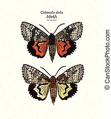catocala, gezin, moth, trekken, hand, dula, vector., ...