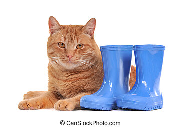 Cats and Blue Boots