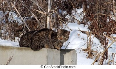 Cats are basking in the sun sitting on a cold concrete block in winter