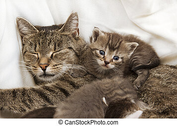 cats babies cuddle with mother - A heap of cat is cuddly ...