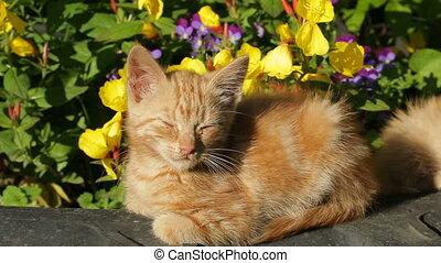cats basking in the sun in the garden