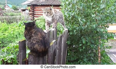 Cats communicate on nature in garden on fence - Two cats...