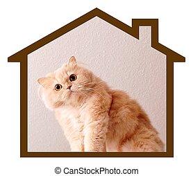 Cat's dream house