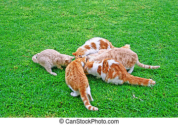 Cats feeding - Cats family during feeding on green grass.