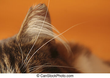 My cat's hairy ear and whiskers