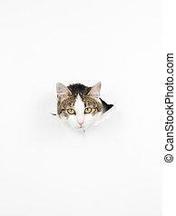 cat's head through a hole in a paper