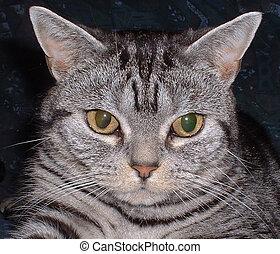 Cats Headshot