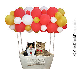 Cats in a color balloons
