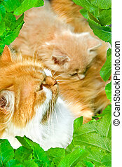 Cats in a framework from leaves