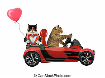 Cats in love in red car 2