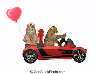 Cats in love in red car