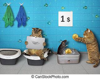 Cats in public restroom 2